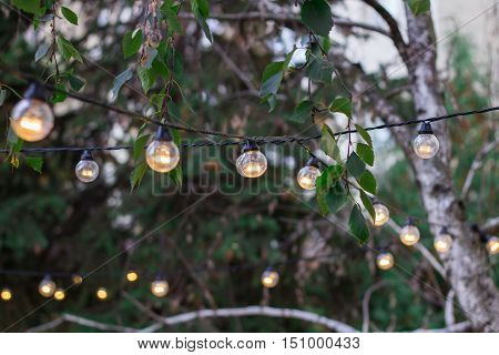 Decorative Electric Festoon Of Lighting Bulbs Hanging On Tree Branches