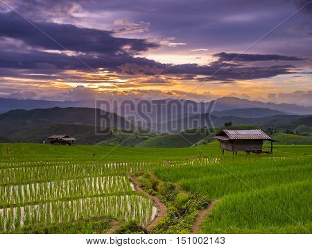 Sunset and Green Terraced Rice Field in Pa Pong Pieng Mae Chaem Chiang Mai Thailand.