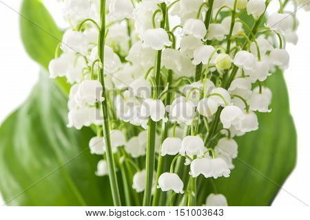 lily of the valley flowers closeup isolated on white background