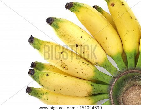 closeup bunch of banana on white background, tropical fruit sweet taste and energizing