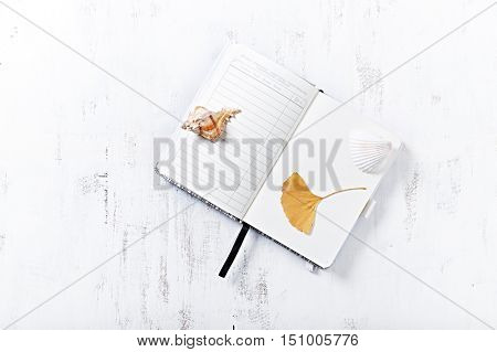 Dried ginkgo leaf and shells on an open notebook