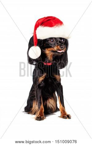 New Year Dog in Santa Hat Isolated on White Background