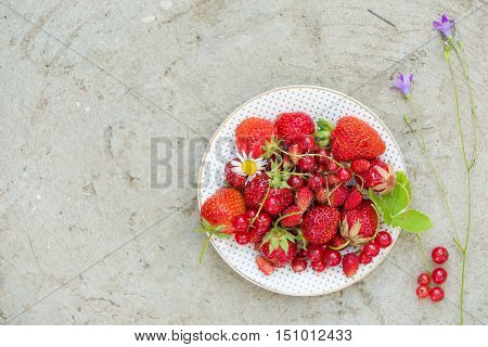 Top view on white plate with fresh organic strawberry red current and wild berries and flowers on grey concrete background. Summer and healthy food concept