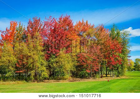 Indian summer in the French Canada.  Multi-color trees are beautifully allocated against the background of the blue sky