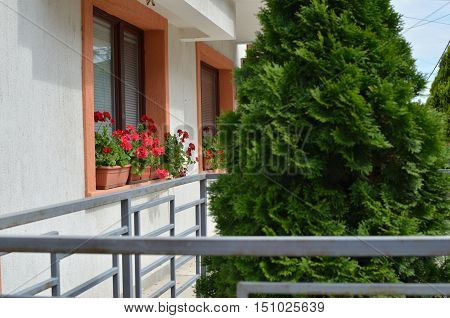View to a front yard with flowers in pots and garden tree