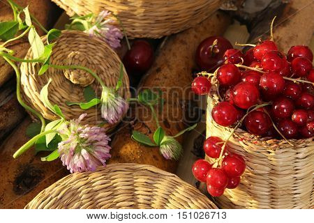 Red Currant In Wattled Busket Against Background Branches