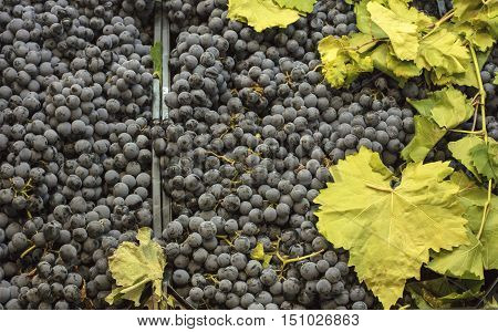 A photo of wine grapes and leaves on sale in a market