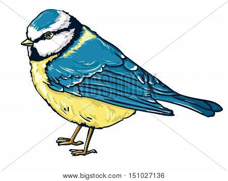 illustration bird titmouse winter, bird vector illustration