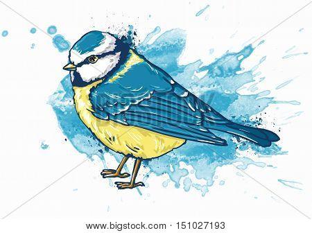 watercolor illustration Titmouse, vector bird illustration,  illustration bird titmouse winter