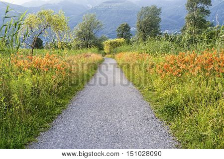 The path for pedestrian anc bicycle known as Sentiero Valtellina near Colico (Lecco Lombardy Italy) at summer