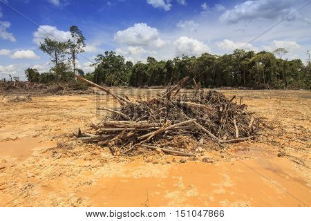 Deforestation environmental problem, rain forest destroyed for oil palm plantations,