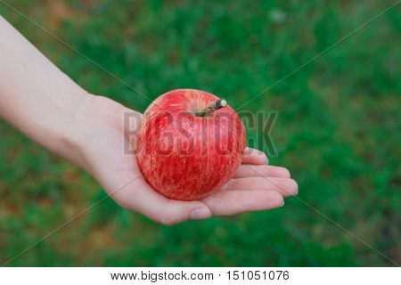 Child's hand hold red ripe apple on green grass background. Closeup of fresh organic apple. Autumn garden in village. Growing seasonal fruits, gather harvest at farm, agricultural concept