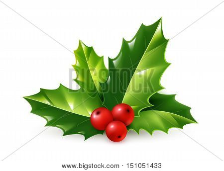 Vector realistic holly Christmas ornament. Holly green leaves and red berries isolated on white background
