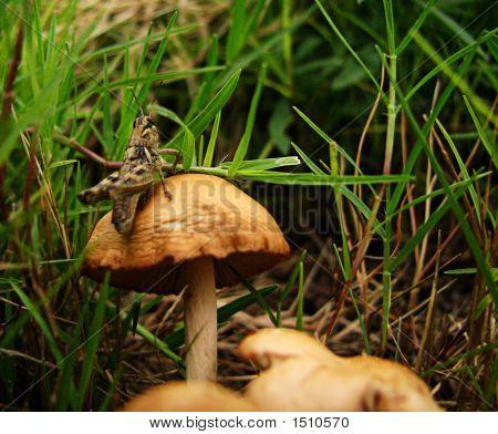 Mushroom Hopper