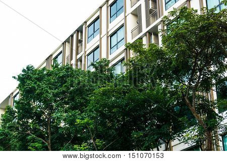 Window Of Apartment Building With Tree