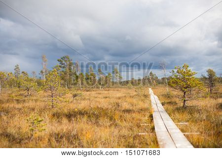 Wooden boardwalk in a swamp with fall storm clouds gathering in the background