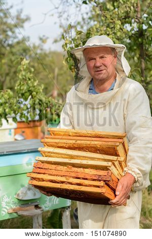 Beekeeper is working with bees and beehives on the apiary. Beekeeper on apiary. beekeeper carries empty honey cells. Apiarist is working in his apiary.