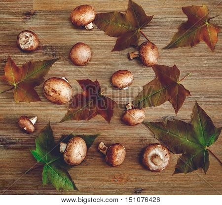 Background from Green Leaves.Fresh Champignons on the Wooden Table.Autumn Texture.Top View