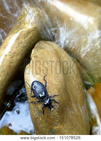 in the water large stones with wet black beetles