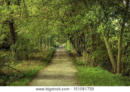 Dirt path through woods in late summer, Ontario Canada