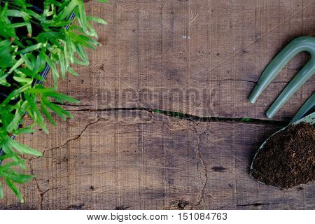 Garden Tools And Sprouts On Wooden Table Top