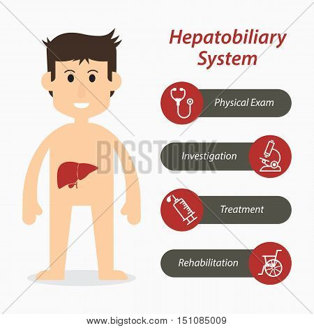 Hepatobiliary system and medical line icon .
