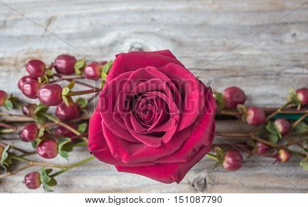 horizontal close up image of a single fuchsia pink rose framed with cranberries on old rustic wood background great for a greeting card idea.