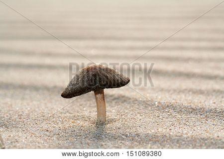 Fungus Growing On Sand