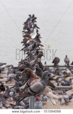 Bird (pigeon, Dove) At A Port Or Harbor