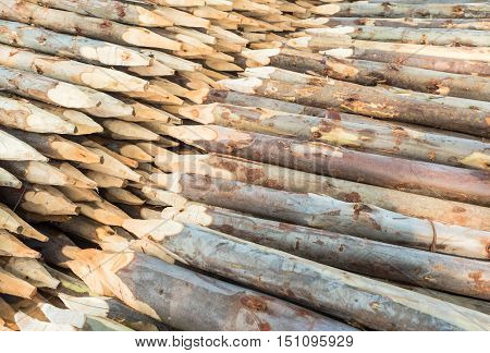 Stacked wood pine timber for material construction.