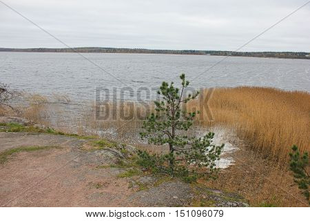 Lake shore landscape with single tree and plants autumn spring scenery. Rural nature, non-urban scene. Outdoor, park, tourism, fall season, peaceful, calm environment.