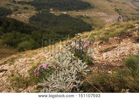 Purple wildflowers on a hillside and trees