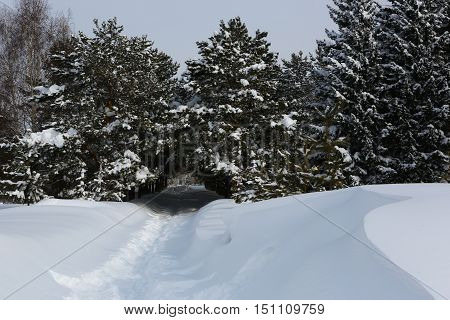 Nature, landscape, winter, snow, road, winter day, winter road, drifts, Kazakhstan, tunnel, snow tunnel, Park, forest, winter forest