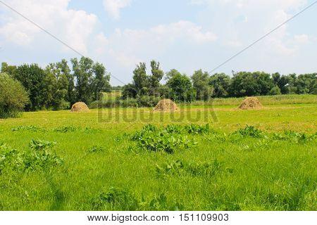Haystacks on the green meadow on summer