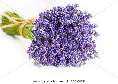 Bunch of wild mountain lavender flowers on white background