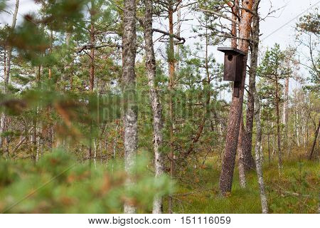 Big nesting box (birdhouse) for wild birds in a peatland pine forest