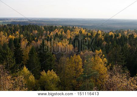 Aerial view of a colorful autumnal forest at sunset