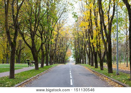 Empty car driveway in the city lined with colorful autumnal trees in fall season