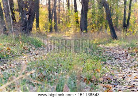 Path in the autumn forest blurred. The path is strewn with dry leaves