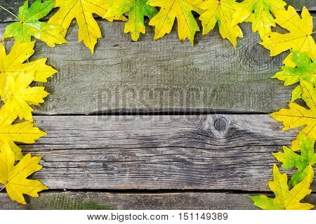 Yellow, Green And Red Tree Autumn Leaves, Frame Composition On Vintage Board Background.