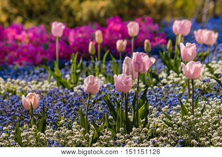 close up of colorful springtime flowers flowerbed