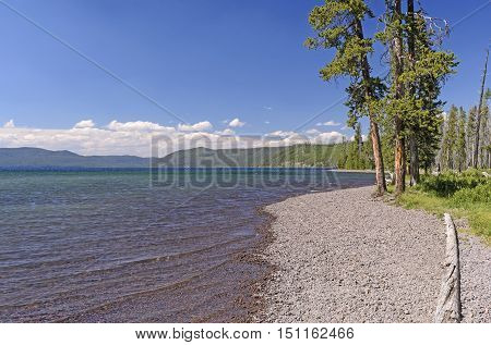 Shoshone Lake on a Summer Day in Yellowstone National Park in Wyoming