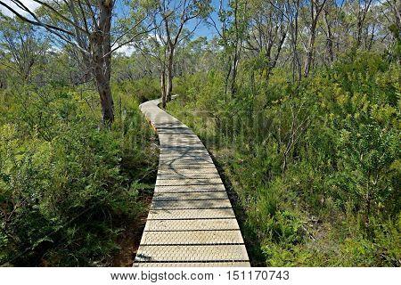 Walking track through a forest in Tasmania