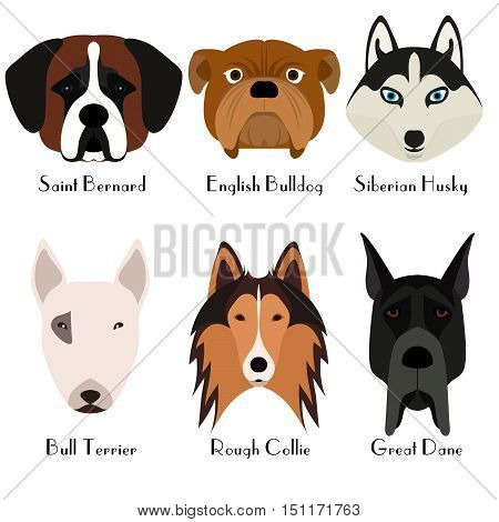 Set of 6 dog's head. Flat design. Pets. Cute doggies. Dog icon. Logo. Cartoon character. Animals. Vector illustration eps10