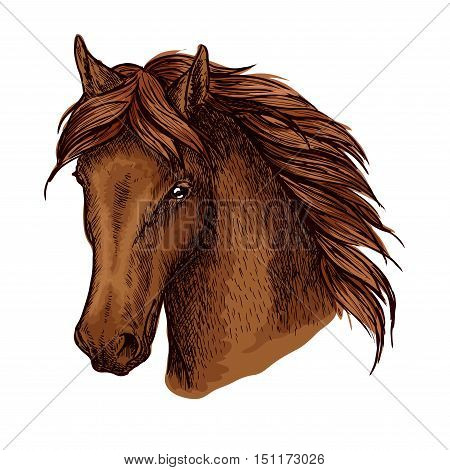 Brown horse portrait. Graceful and noble mustang with proud look and beautiful eyes