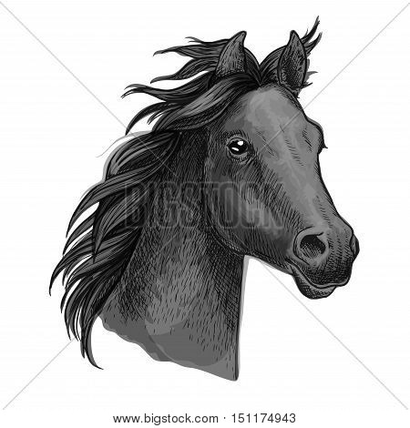 Horse portrait. Dark gray horse profile with wavy mane. Artistic vector sketch portrait