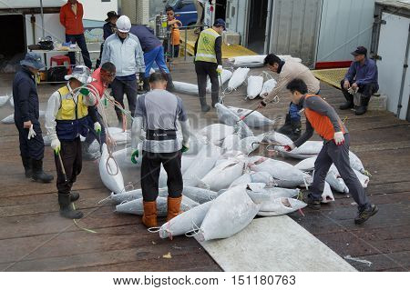 Busan South Korea - September 22th 2016: Busan fish port sorting of hulks of a frozen tuna.