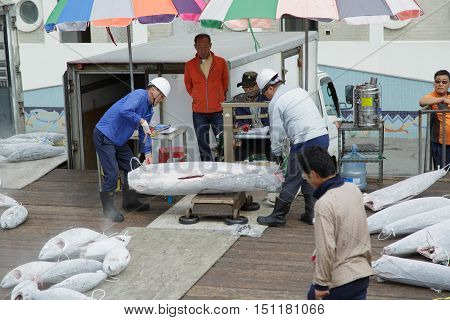 Busan South Korea - September 22th 2016: Busan fish port weighing of the hulk of a frozen tuna.
