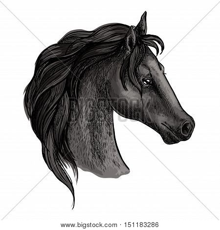 Horse portrait. Black mustang profile with wavy mane and proud noble look. Artistic vector sketch