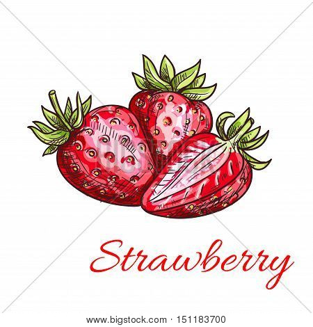 Strawberry color sketch icon. Isolated bunch of strawberries with leaves. Fruit product vector emblem for juice or jam label, packaging sticker, grocery shop tag, farm store